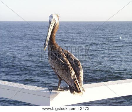 Seabird1