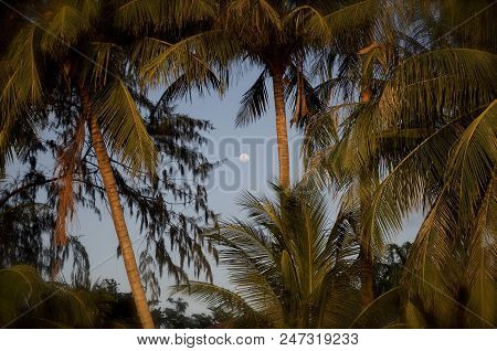 Palm View In The Night In Thailand