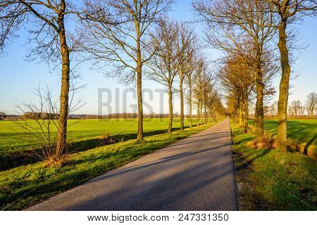 Seemingly Endless  Country Road In The Netherlands With Tall And Bare Trees At Both Roadsides Silhou