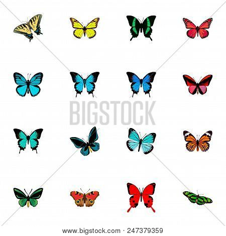 Set Of Beauty Realistic Symbols With Precis Almana, Papilio Ulysses, Sky Animal And Other Icons For