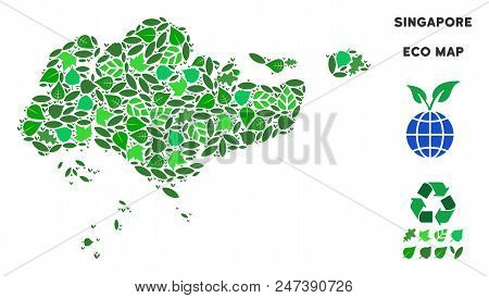 Ecology Singapore Map Collage Of Floral Leaves In Green Color Shades. Ecological Environment Vector
