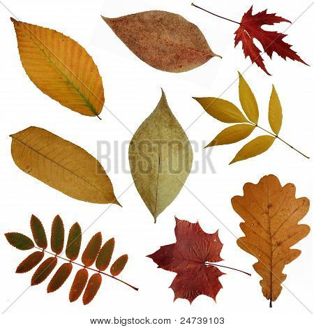 Some Autumn Leaves