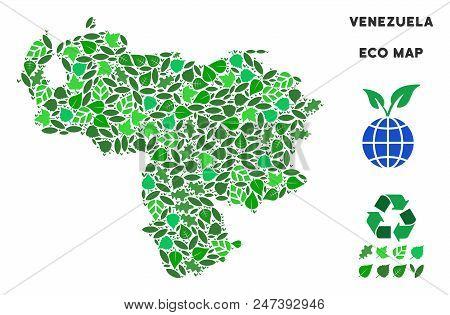 Ecology Venezuela Map Mosaic Of Herbal Leaves In Green Color Tones. Ecological Environment Vector Te