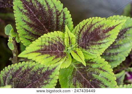 Ornamental Decor Plant Leaves, Nature, Houseplant Leafs