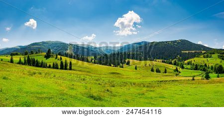 Panorama Of Mountainous Landscape In Summer. Spruce Forest On A Grassy Hills In The Valley Of Carpat