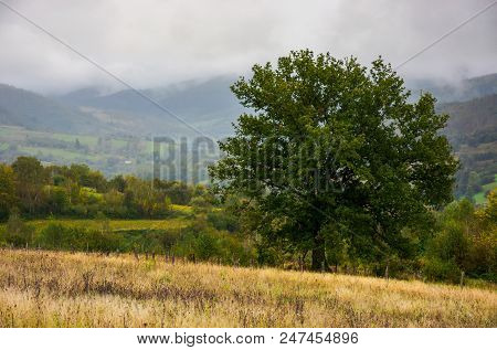 Lonely Oak On Hillside Clearing. Lovely Autumnal Foggy Weather In Mountains