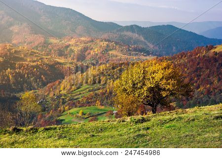 Tree On A Grassy Hillside In Autumn Mountains. Beautiful Scenery At Sunrise. Small Village Down The