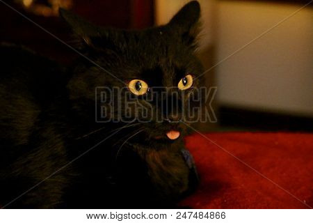 Cheeky Black Cat With Poking His Tongue Out