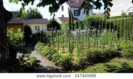 Vegetable Garden, Permaculture With Straws On Ground, Wooden Stakes