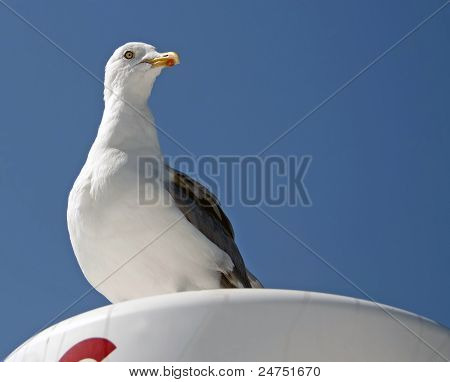 Watchful seagull under a blue sky, France poster
