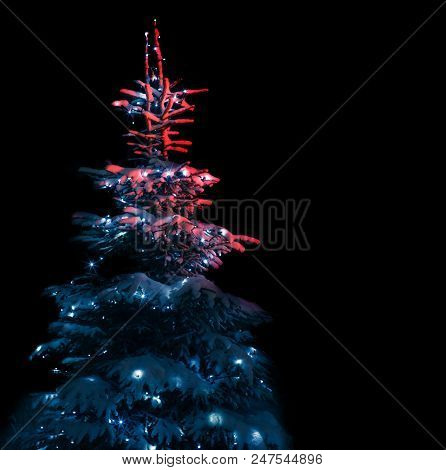 Snow-covered Christmas Tree Decorated With Lights In The Forest