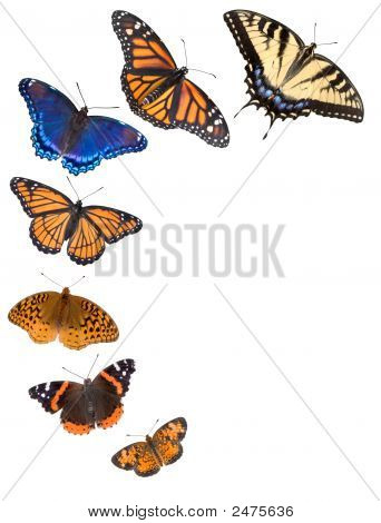 Butterfly Border Background