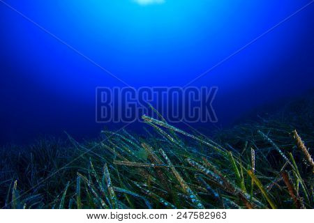 Underwater seagrass and blue ocean