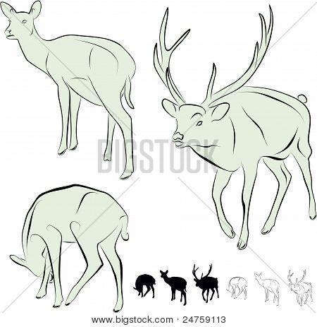 deer,  calves, cloven-hoofed animals, New Year's deer