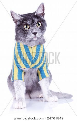 adorable cat withe nice eyes wearing clothes over white background poster