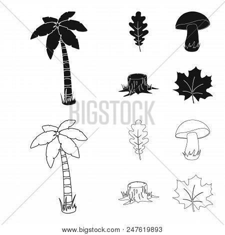 Oak Leaf, Mushroom, Stump, Maple Leaf.forest Set Collection Icons In Black, Outline Style Vector Sym