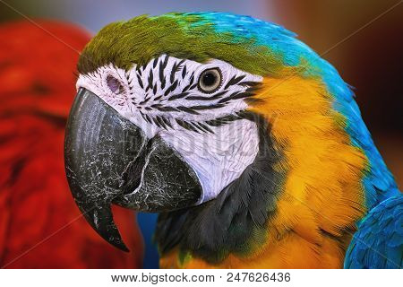 Portrait Of The Macaw Parrot Over The Background