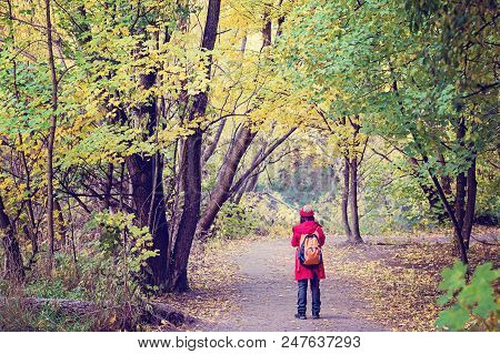 Walker On A Pathway In A Forest Of Autumn Foliage In Arrowtown New Zealand