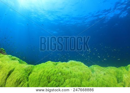 Underwater ocean with green algae and blue water