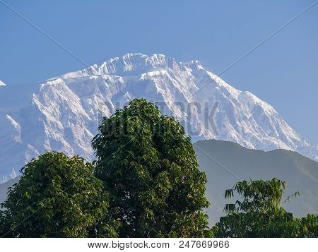 Mount Lamjung Himal Located In Annapurna Massif In The Himalayas. View From Pokhara City With A Tree