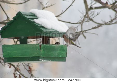 Small bird house at winter time - Stock photo poster