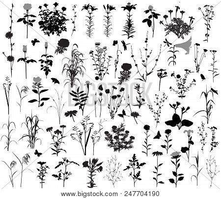 66 Silhouettes Of Flowers And Plants. 10 Silhouettes Of Insects.