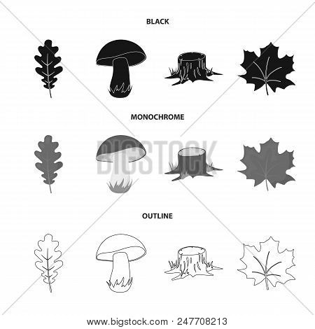 Oak Leaf, Mushroom, Stump, Maple Leaf.forest Set Collection Icons In Black, Monochrome, Outline Styl