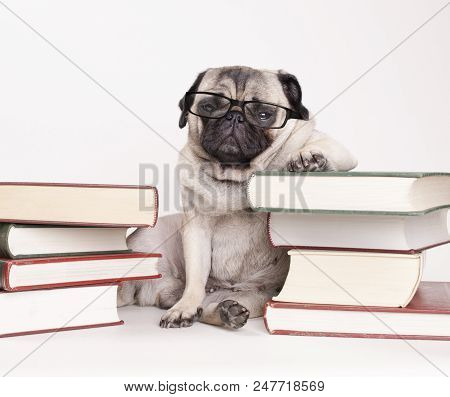 Smart Intelligent Pug Puppy Dog With Reading Glasses, Sitting Down Between Piles Of Books, On White
