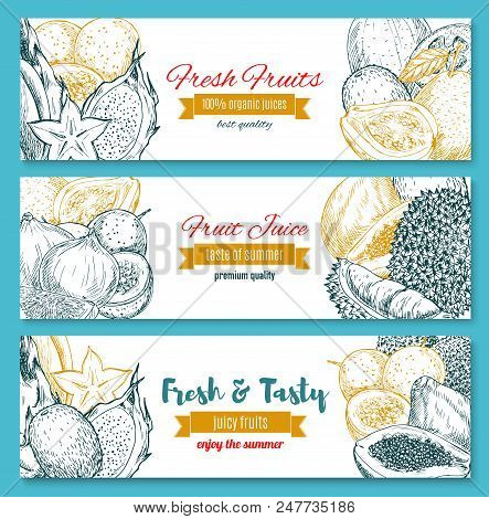 Exotic Fresh Organic Fruits Sketch Banners. Vector Tropical Juicy Lychee, Carambola Or Papaya And Pa