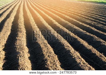 Plowed Field After Cultivation Prepared For Planting Agricultural Crops. Landscape With Agricultural
