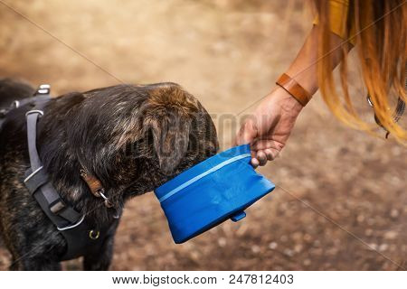 Thirsty german shepherd dog drinks water from a dog bowl given to him by woman poster
