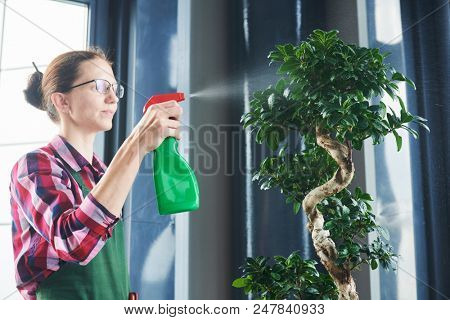 Bonsai care and tending houseplant growth. Watering small tree. poster