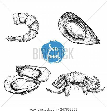 Seafood Sketches Set. Cooked Grilled Shrimp, Opened Mussel,  Oysters Group And King Crab. Sea Market