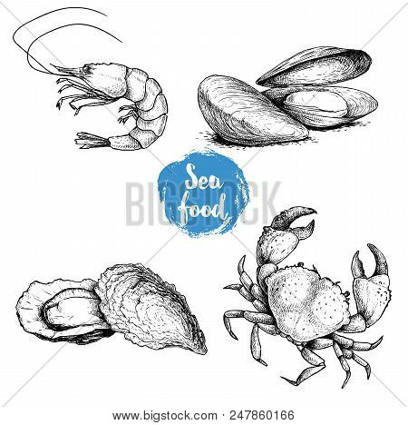 Seafood Sketches Set. Fresh Shrimp, Mussels And Oysters, Crab. Sea Market Products Collection. Vecto