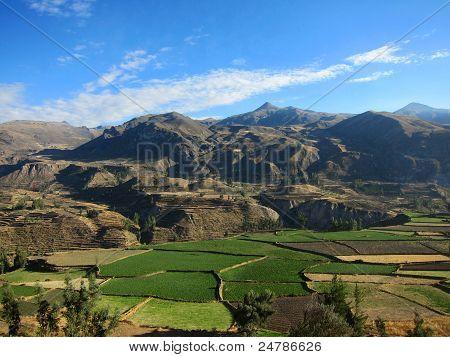 Farming terraces in Peru