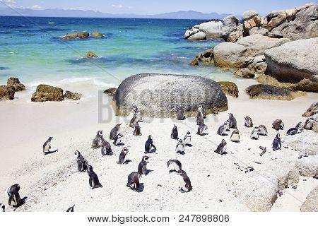 Urlaub In Südafrika, Pinguine Beim Boulder´s Ibeach N Simon´s Town