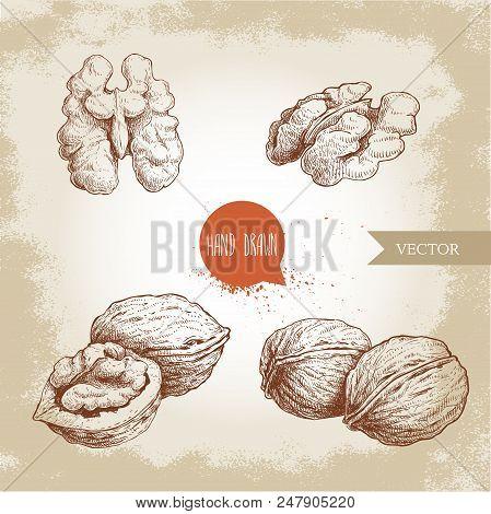 Hand Drawn Sketch Style Walnuts Set. Whole, Half And Walnut Seed. Eco Healthy Food Vector Illustrati
