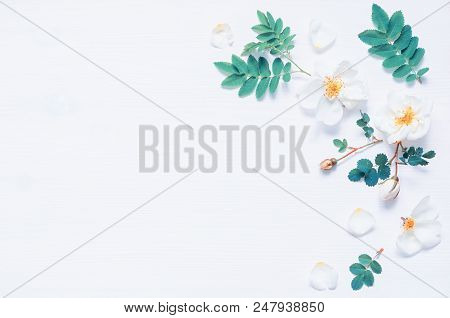 Spring Flower Background With Composition Made Of Spring White Rose Flowers. Flat Lay, Top View, Spa