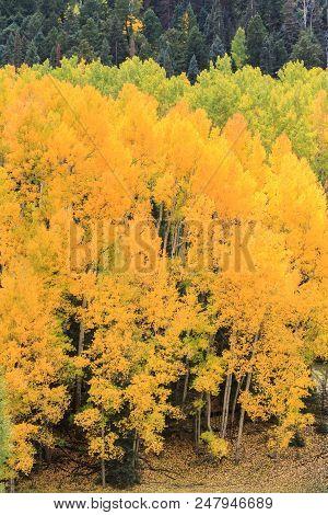 Autumn In Colorado - Colorado Rocky Mountain Scenic Beauty