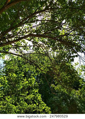 Summer Nature Green Tree Foliage Branch View Park Outdoor Photo