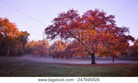 tree with red and yellow leaves in the morning, autumn scenery