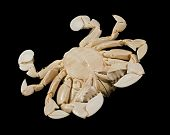 reverse side of a moon crab in black background poster