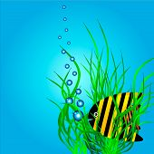 The marine life - a large tropical fish in green algae. Vector illustration. poster
