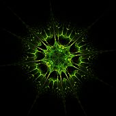 Haeckel inspitation - Radial Symmetry of Protozoan    - Fractal Art poster