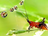 Water droplets with Grasshopper for background use poster