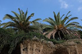 Palm Trees At Park Güell, Barcelona (catalonia, Spain) With A Pigeon Visible On The Ledge. Bright Su
