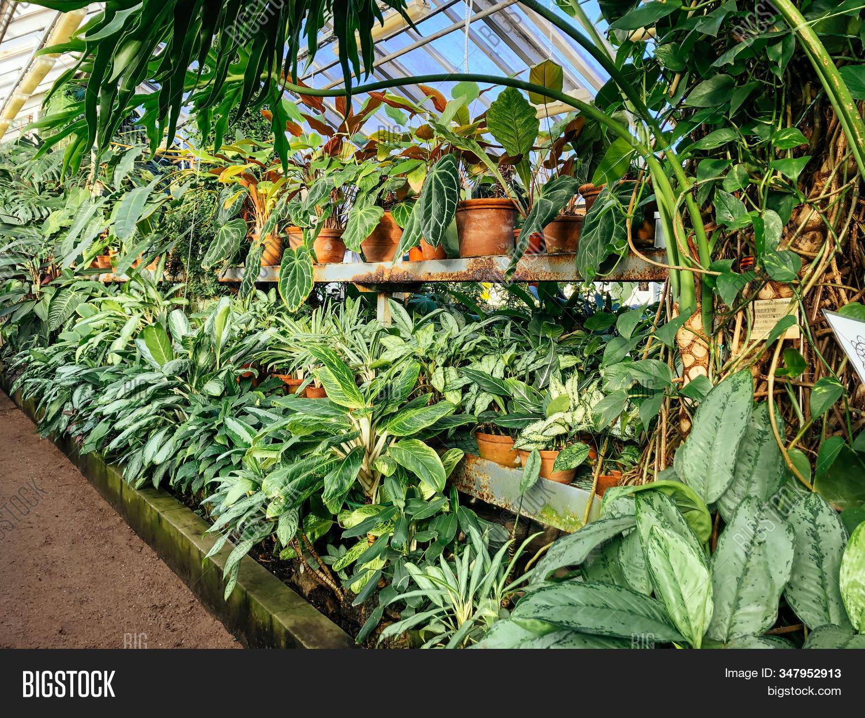 Various Exotic Image Photo Free Trial Bigstock