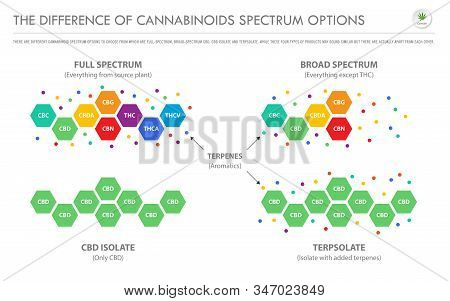 The Difference Of Cannabinoids Spectrum Options Horizontal Business Infographic Illustration About C