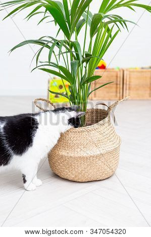 Black And White Cat Hid His Head In A Wicker Basket With A Flower. Vertical Photo