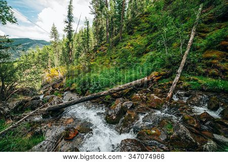 Scenic Landscape To Wild Beautiful Flora On Small River In Woods On Mountainside. Mossy Fallen Tree